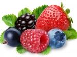 Анализ почвы под ягодные культуры