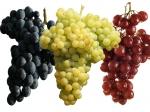 Анализ почвы под виноградные насаждения
