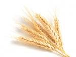Анализ почвы под зерновые культуры