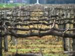 Обучение обрезке винограда